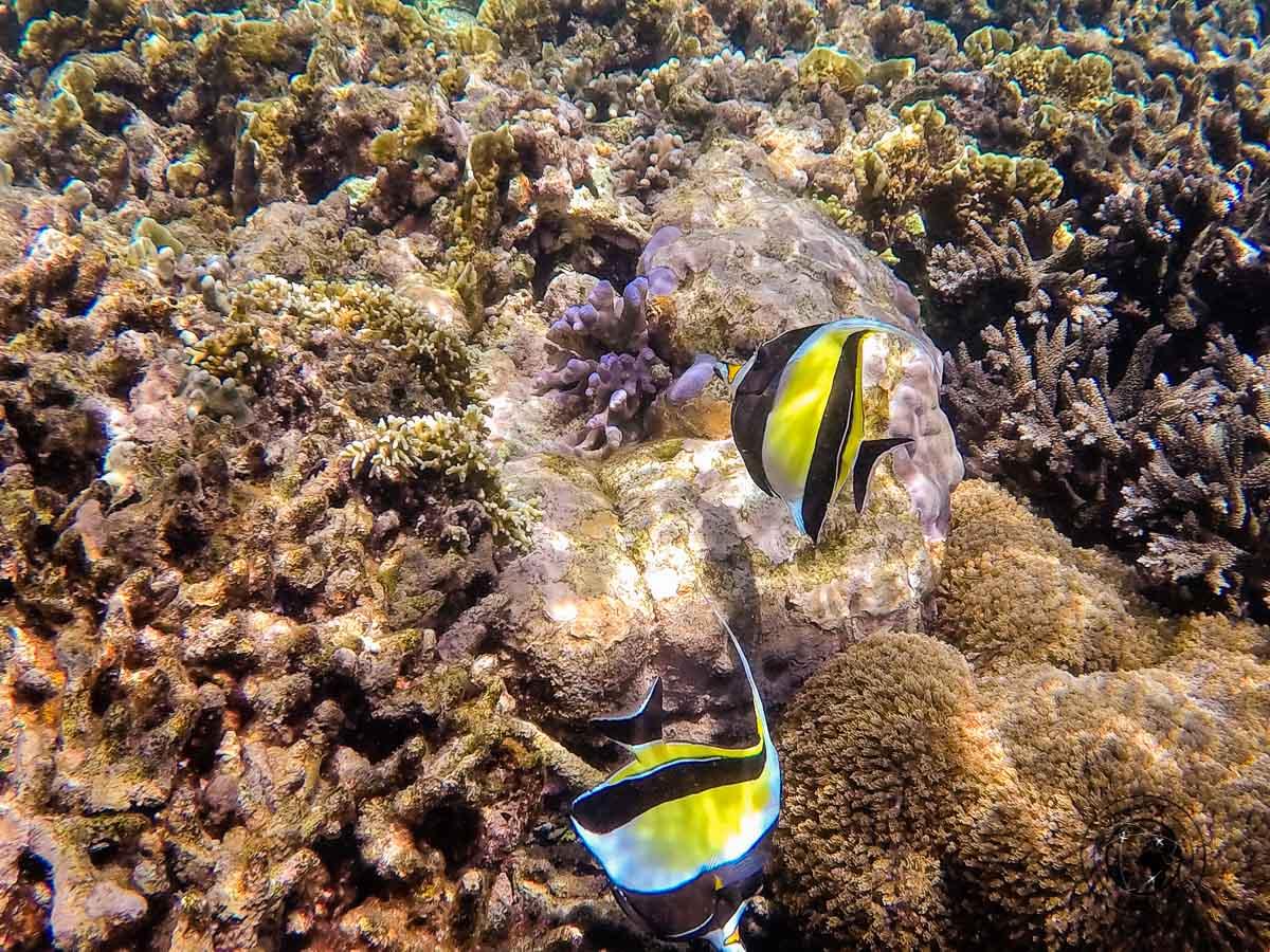 Snorkeling off the Banda islands, Maluku offers some amazing views!