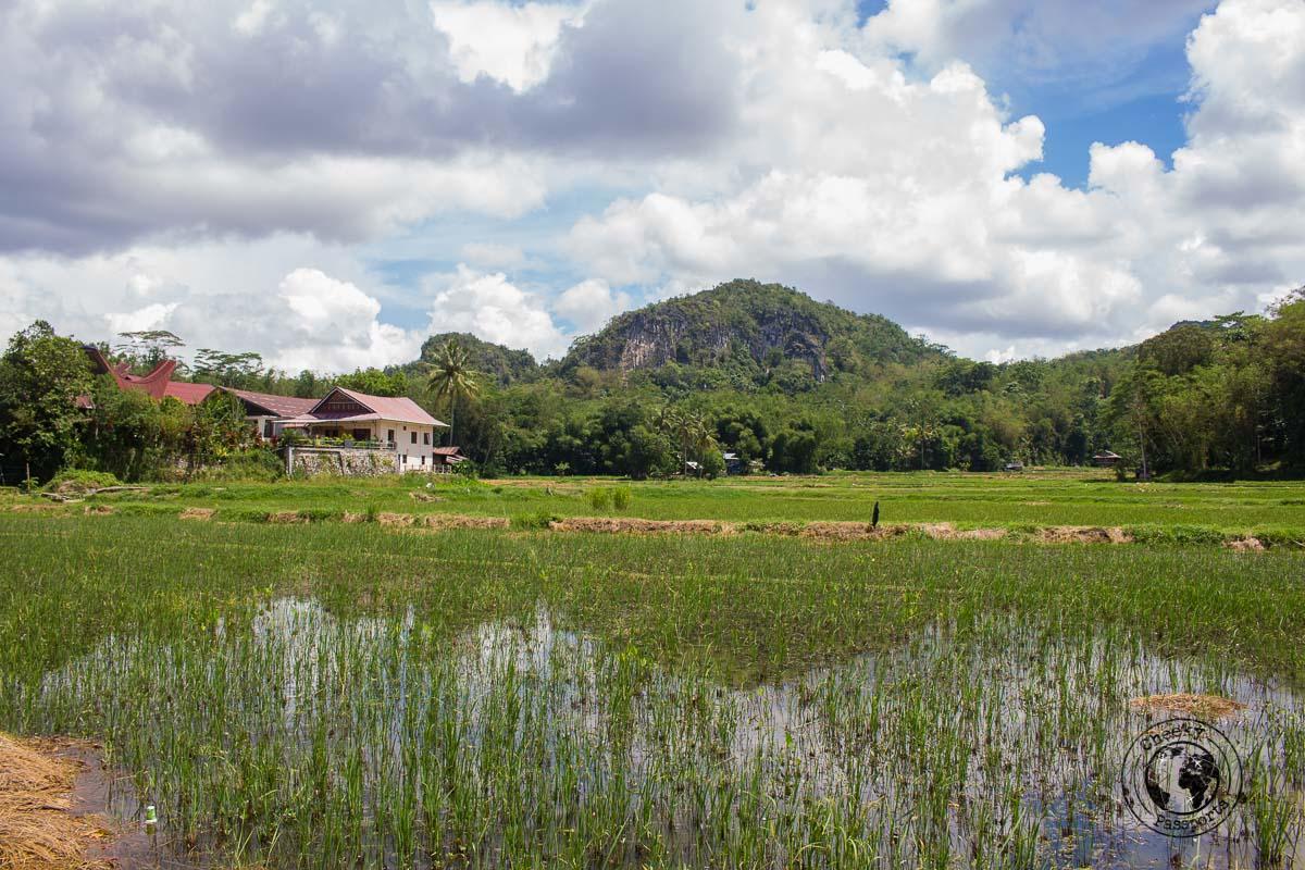 The countryside around Rantepao is a joy to bike around