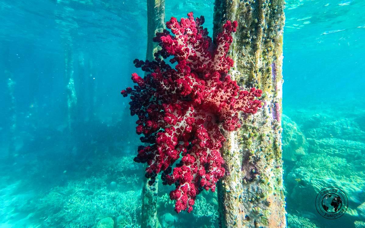Underwater joy beneath the piers of kri island