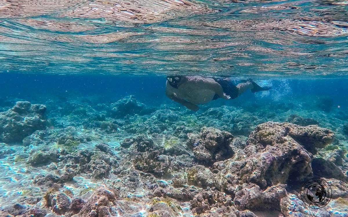 snorkeling off Banda Run in Banda Islands, Maluku