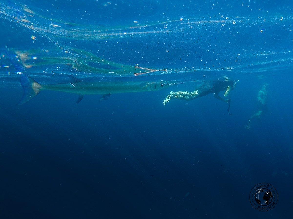 the marine life around Raja Ampat makes for some interesting snorkeling