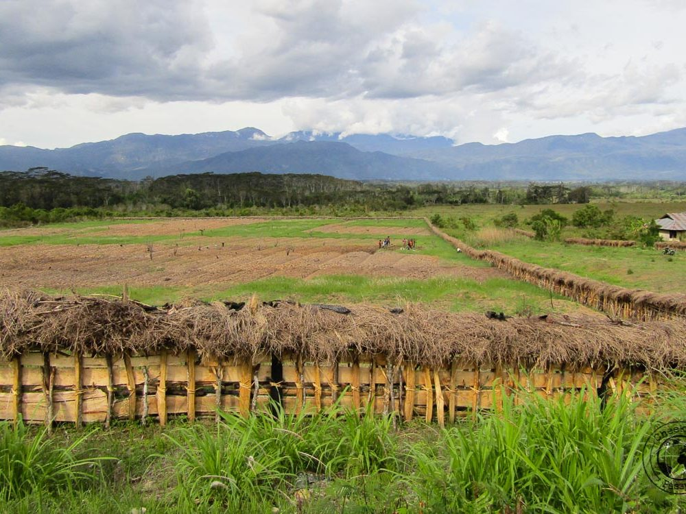 Exploring The Baliem Valley, Papua – Tribes and Mummies