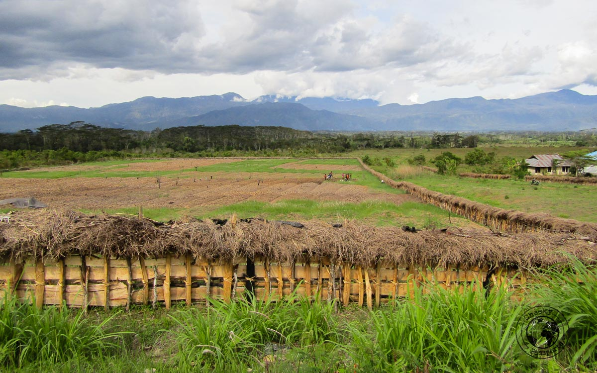 The lush fields around the baliem valley
