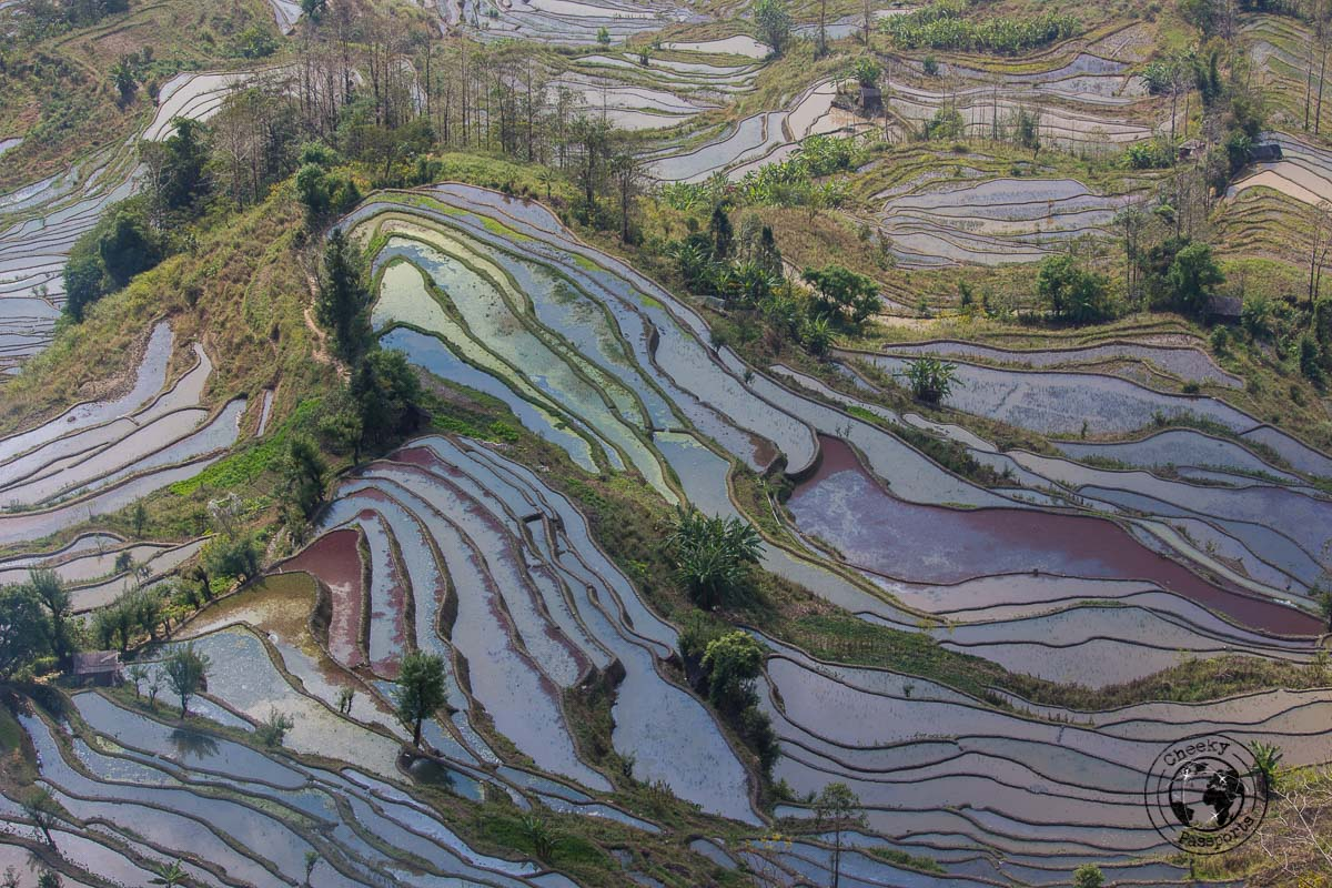 Laohuzui Terrace detail - How to get to the Yuangyang Rice Terraces, Yunnan, China