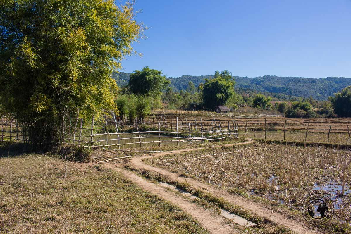 the lush surroundings on the way to site 3 - How to visit the Plain of Jars from Luang Prabang