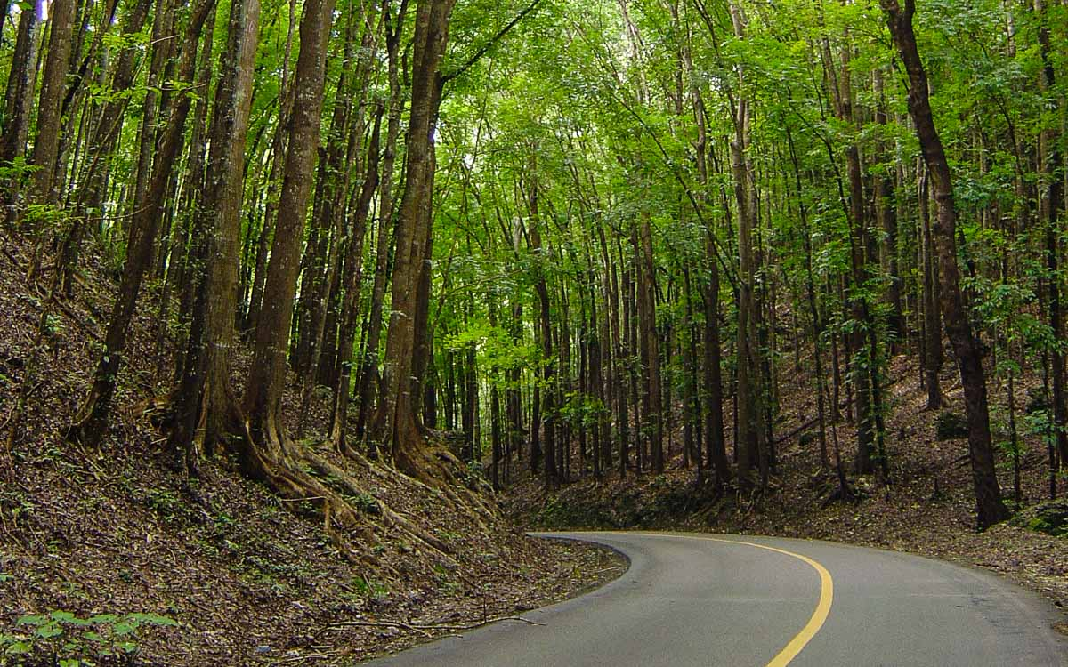 Man Made Forest of Bohol - The Best Bohol Tourist Spots - Our Guide to Bohol - photocredit -Flipbuy