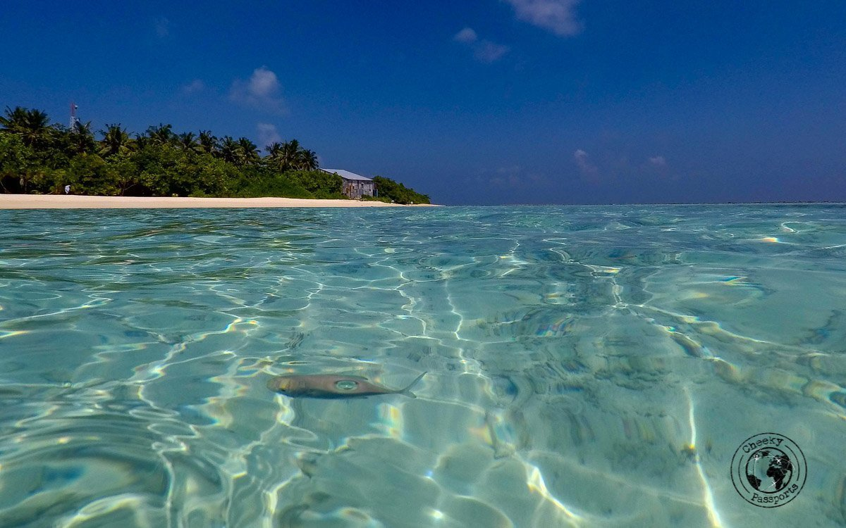 Clear waters in the Maldives - Maldives Itinerary