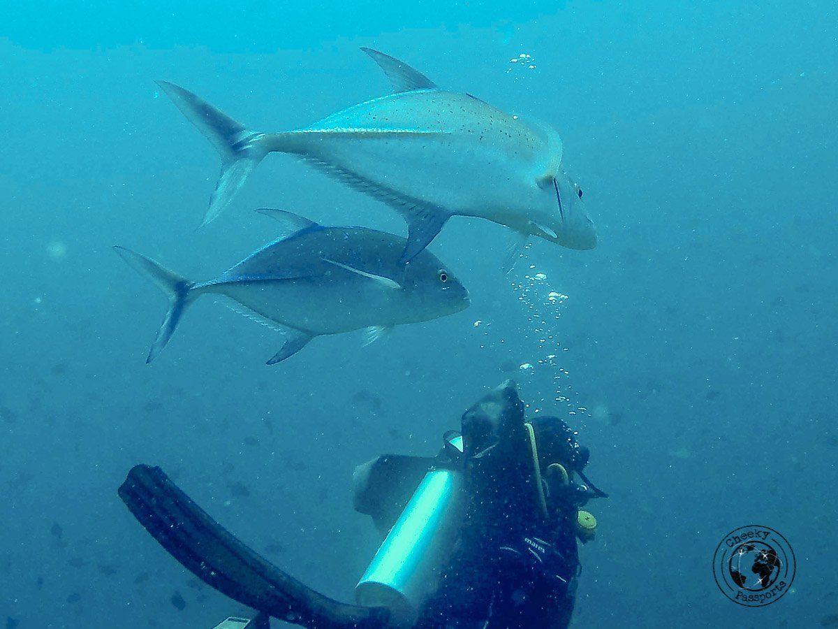 Diving is a very popular activity in the Maldives