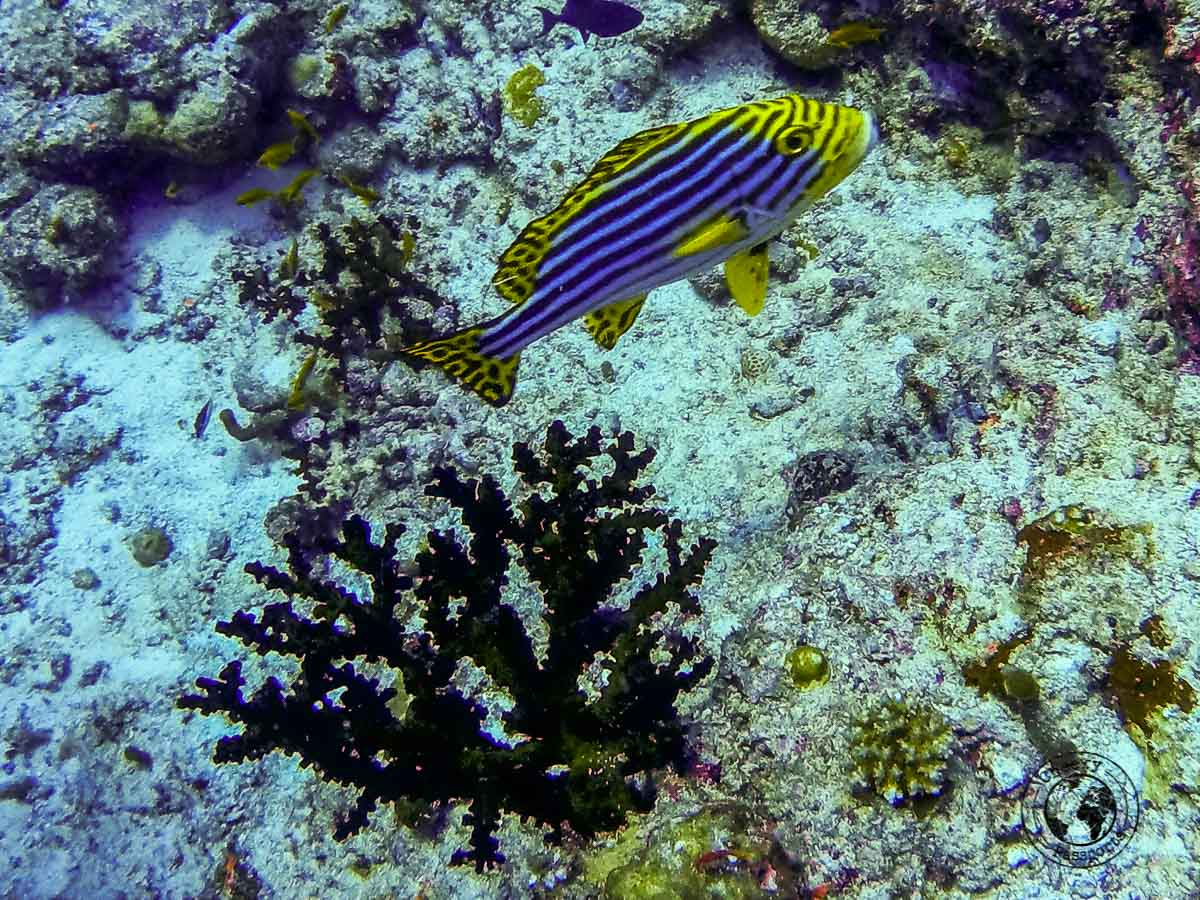 rich biodiversity at the Maldives - Maldives on a budget