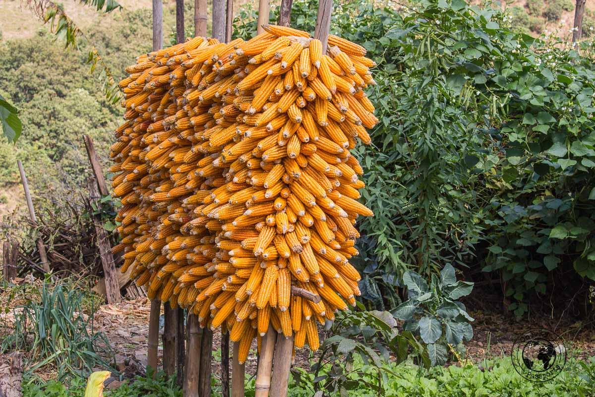 Sotrage of Corn in Dirang - Explore Dirang and Bomdila in Arunachal Pradesh - Northeast India Travel