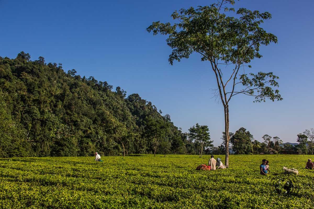From Pasighat to Mechuka, Arunachal Pradesh - North East India Travel Guide