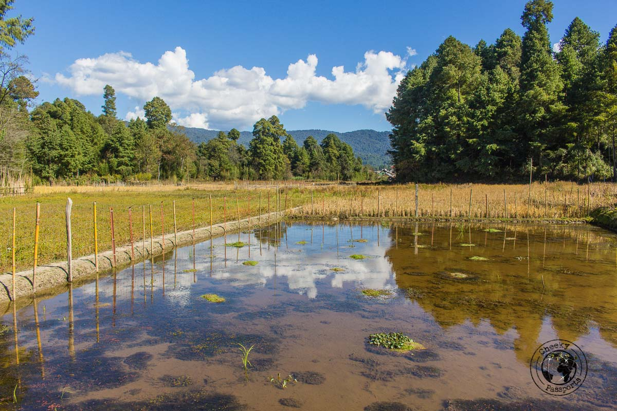 Hiking around the Ziro Valley