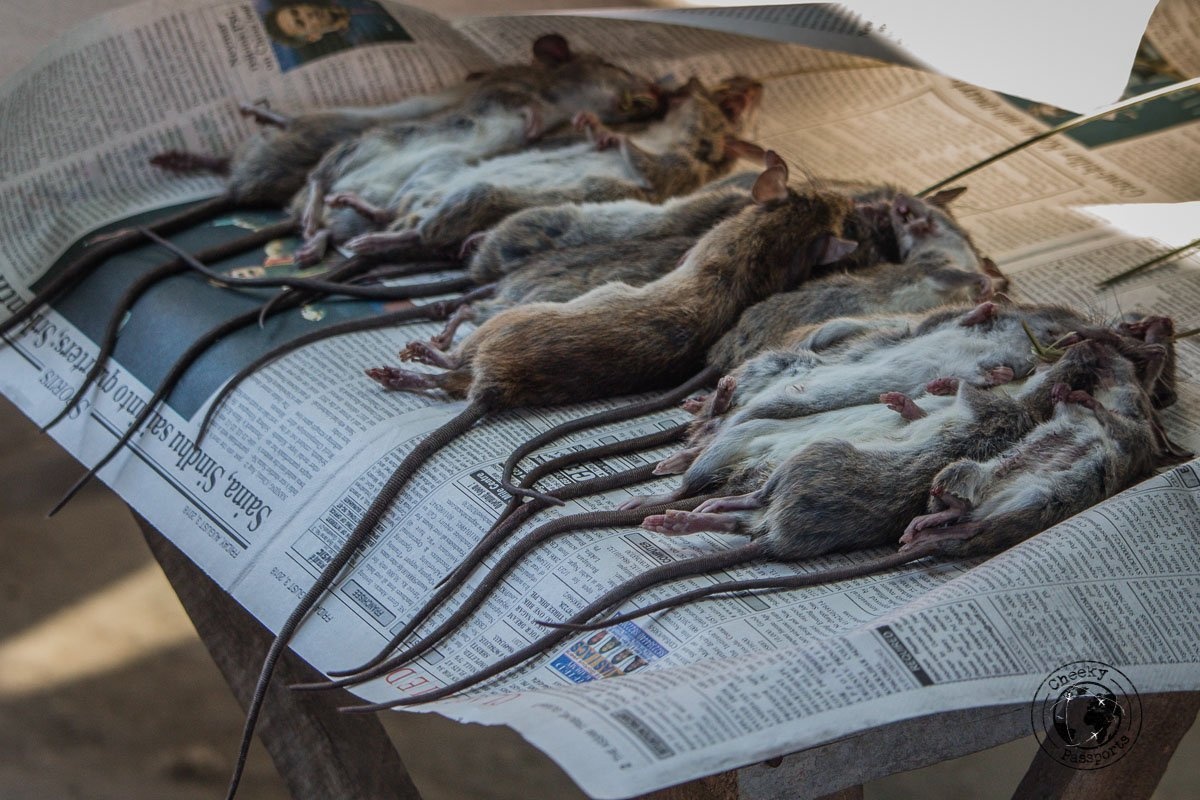 Not your typical delicacy. Rats for sale at the hapoli market in the Ziro Valley
