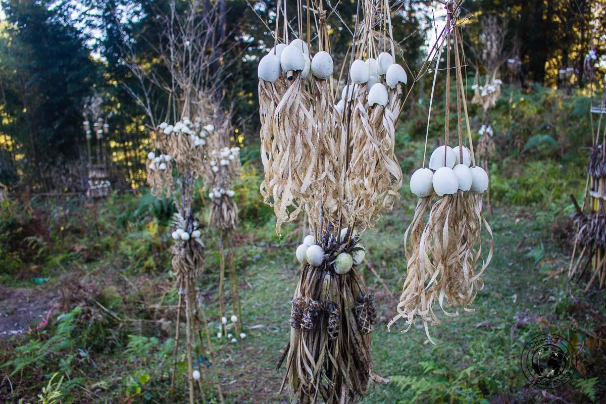 The egg garden in Hong village - Discovering Ziro Valley and the Apatani Tribe of Ziro, Arunachal Pradesh