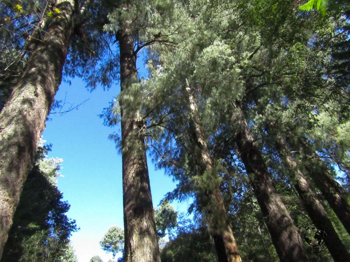 The sacred grove in Ziro, Arunachal Pradesh