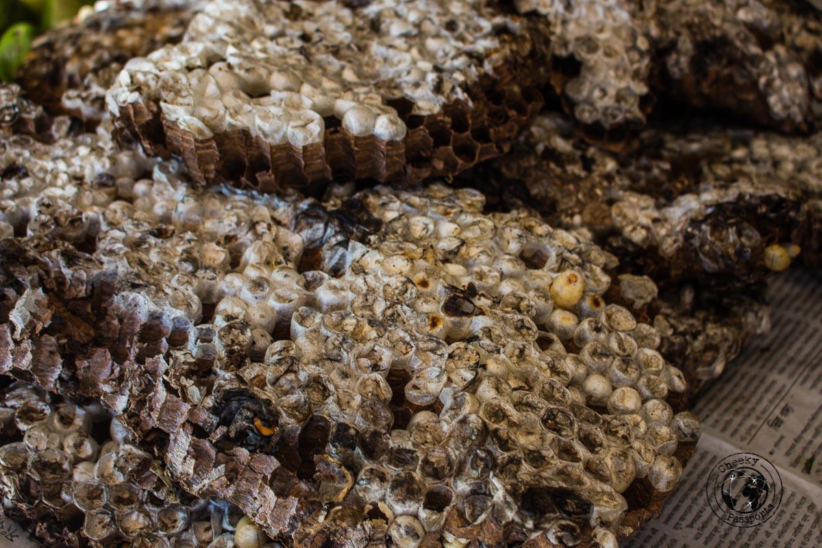 Wasp larvae at the Hapoli market - Discovering Ziro Valley and the Apatani Tribe of Ziro, Arunachal Pradesh