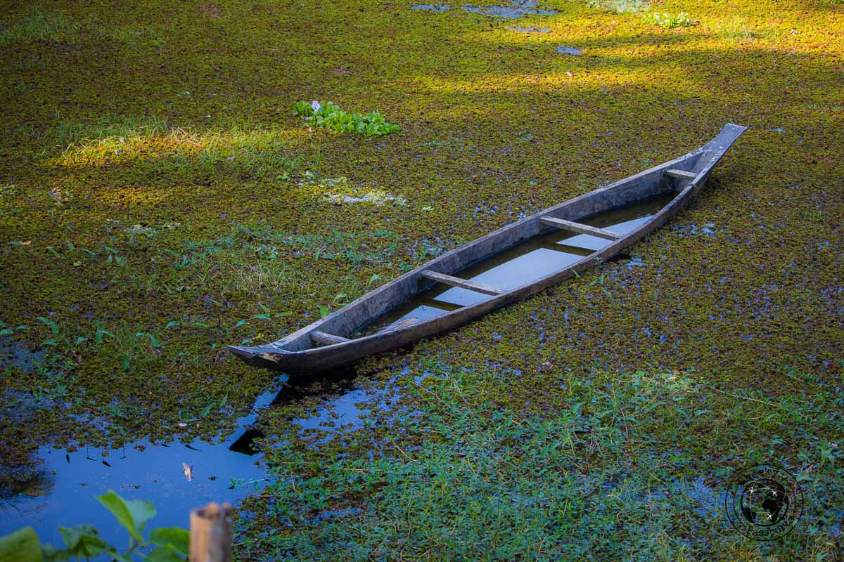 The paddies of Majuli - The Magic of Majuli Island – One of the Best Places to Visit in Assam