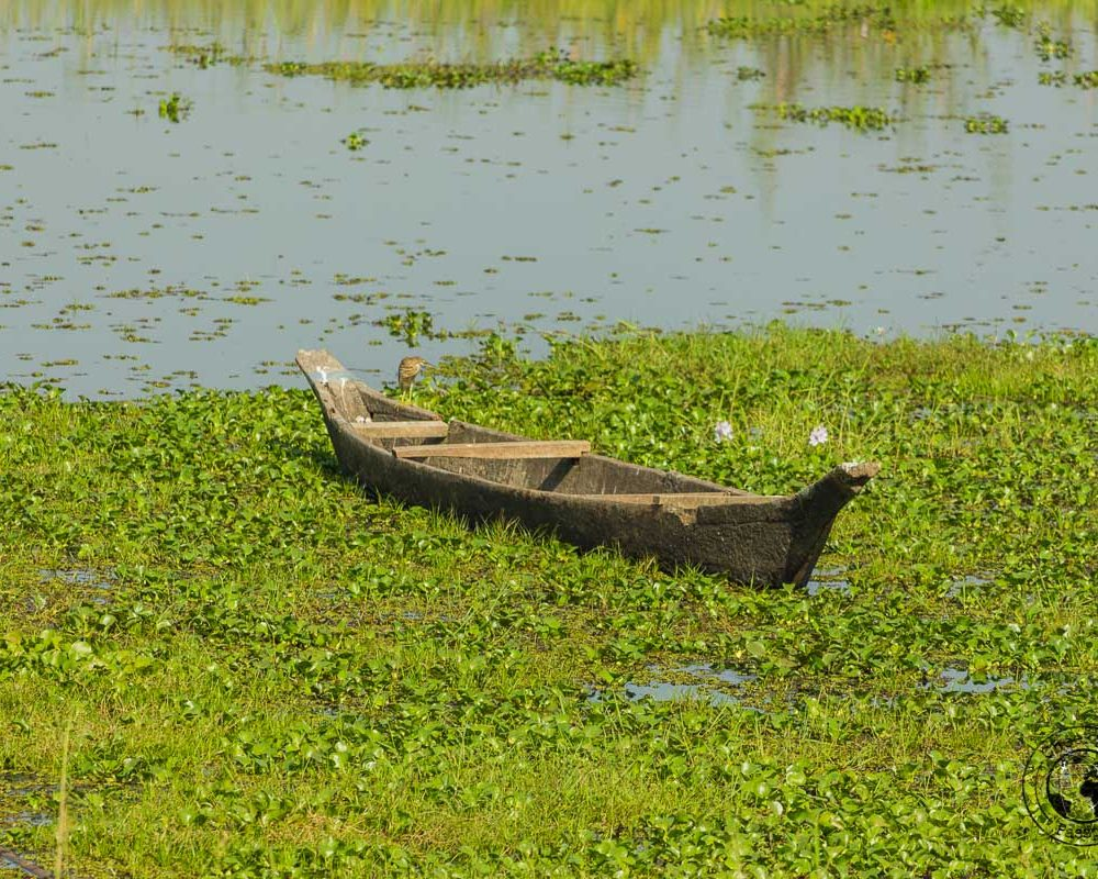 The Magic of Majuli Island – One of the Best Places to Visit in Assam