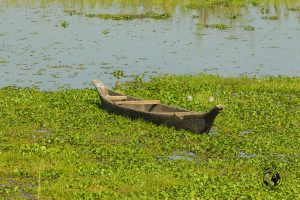 boats in the river - The Magic of Majuli Island – One of the Best Places to Visit in Assam