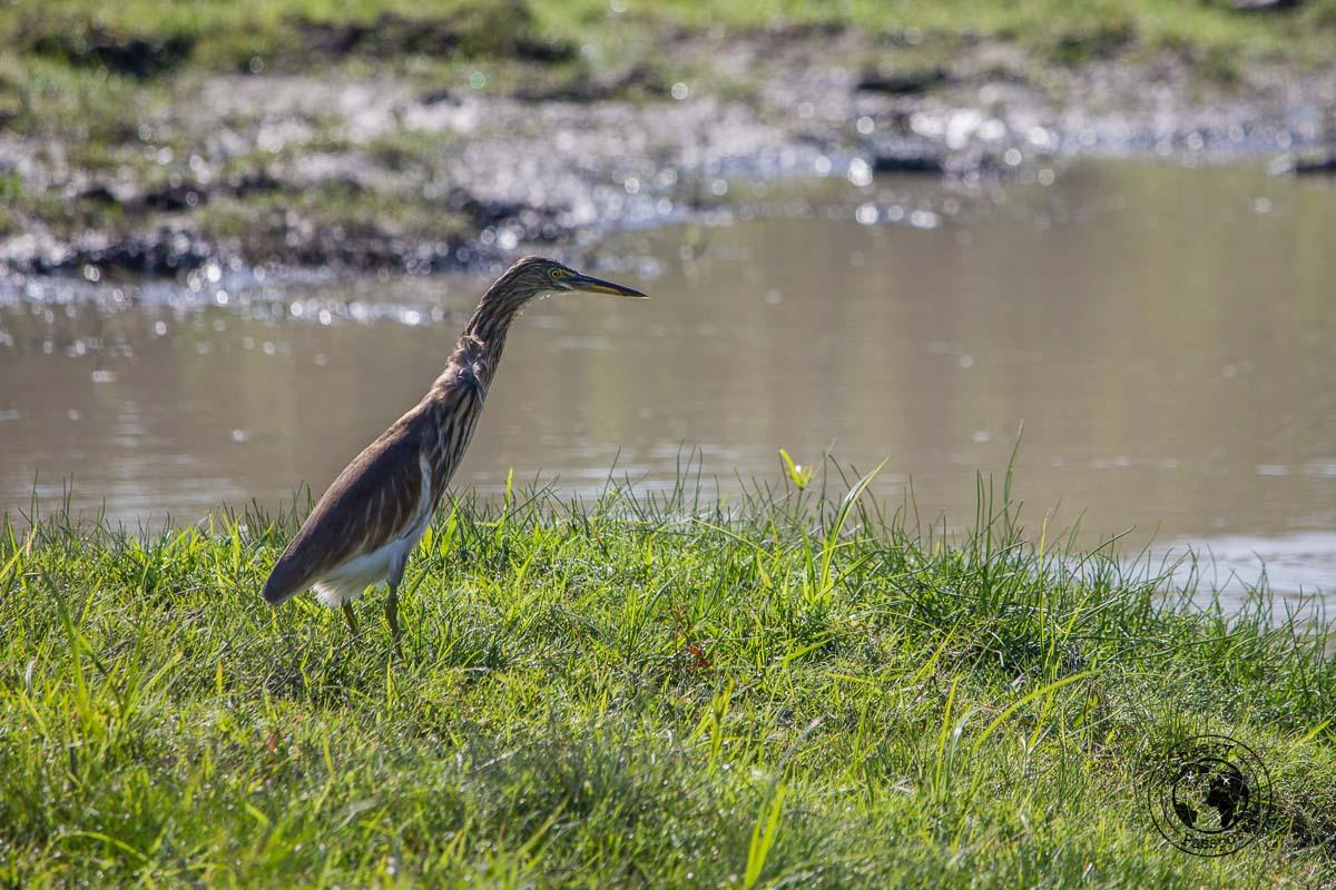 Kaziranga is home to many species