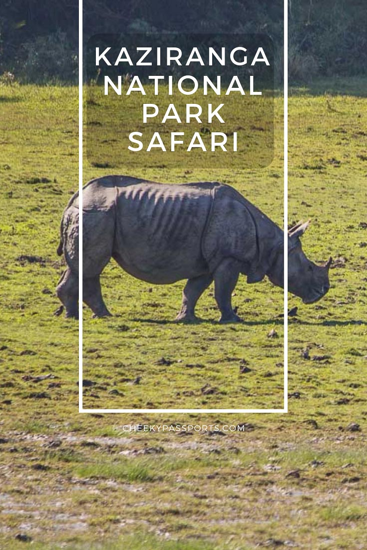 A Kaziranga National Park Safari with the possibility of spotting the one-horned rhino, is easy to organize independently. Here's a full guide to Kaziranga! #kaziranga #awesomeassam #nationalpark #IncredibleIndia #indiaphotos #indiatravel #cheekypassports #animalkingdom #naturephotography #naturephoto #animalphotography #greateronehornedrhino #rhino #safari #travelcouple #wanderlust #wandering #backpackerlife #backpacking #aroundtheworld #traveladdict #travelawesome