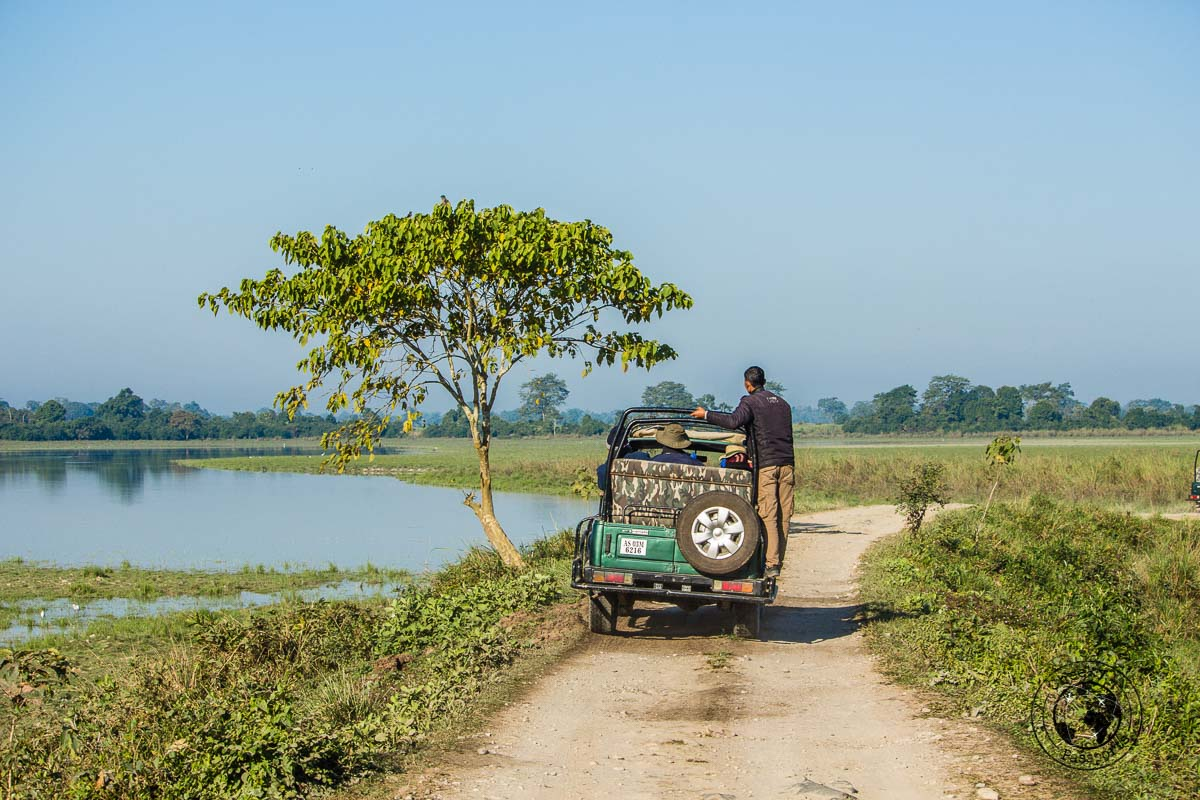 Kaziranga jeep safari - Kaziranga National Park Safari – Searching for the Greater One-Horned Rhino