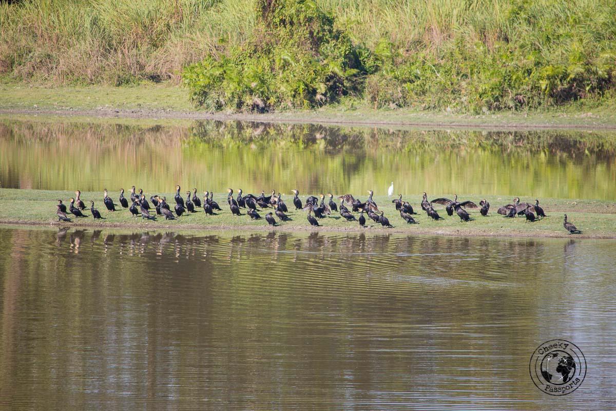 lakeside view at the Kaziranga national park