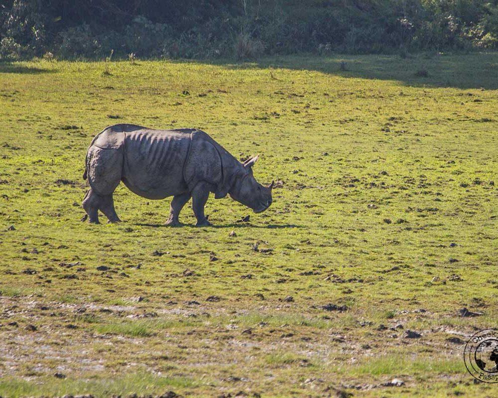 Kaziranga National Park Safari – Meeting the Greater One-Horned Rhino