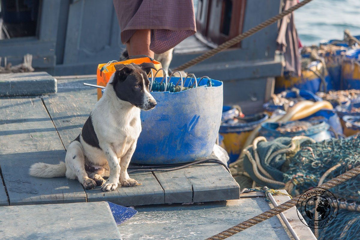 Dogs are thought to 'see' evil spirits - Exploring the Spectacular Mergui Archipelago in Myanmar with Moby Dick Tours