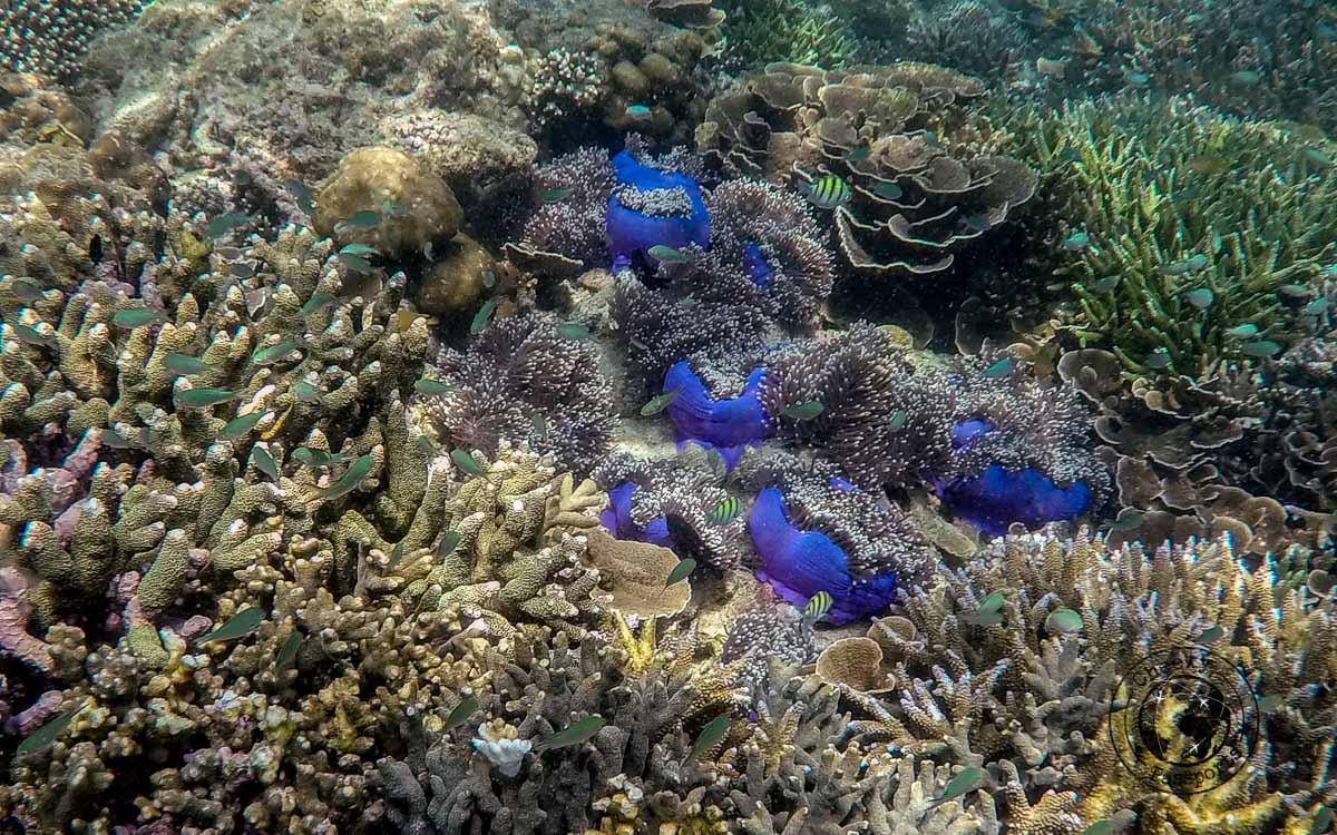 Underwater life at the mergui