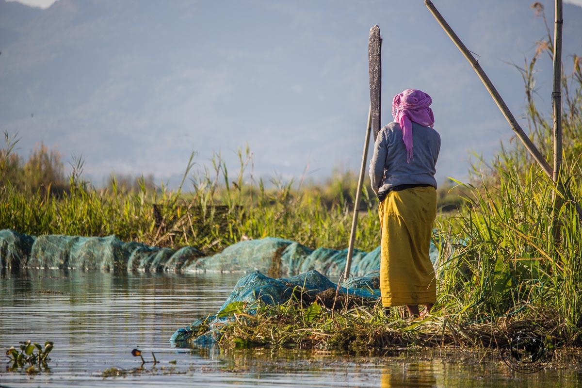 Life on the phumdi at Loktak lake, Manipur