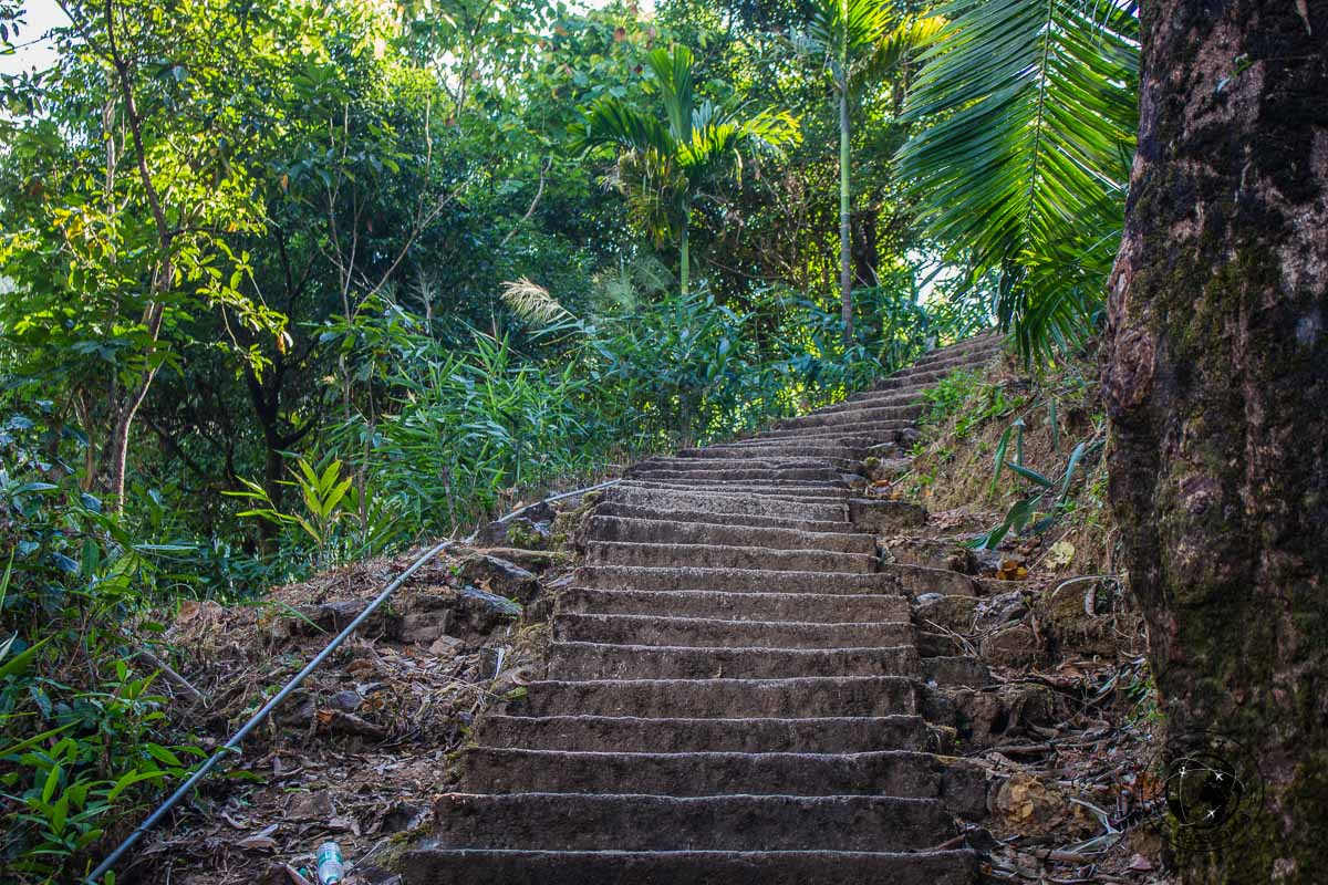Few of the 3600 steps to nongriat village from tyrna in cherrapunji, Meghalaya