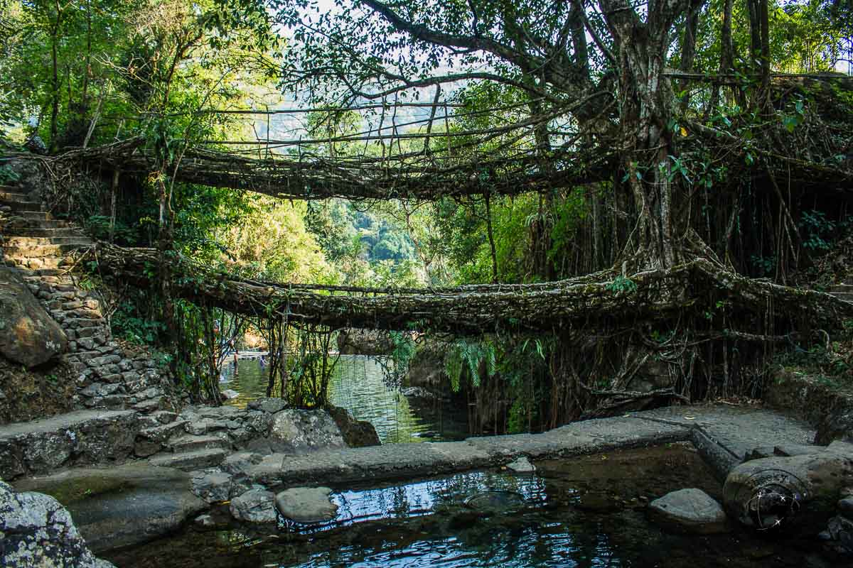 The double root bridge of nongriat, one of the best tourist places in meghalaya