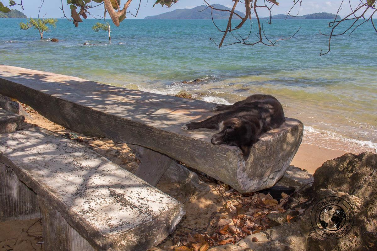 A Dog pretty much symbolising life on the island