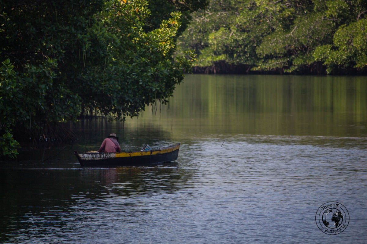 Boatsman on mangrove on the path leading to Long Island