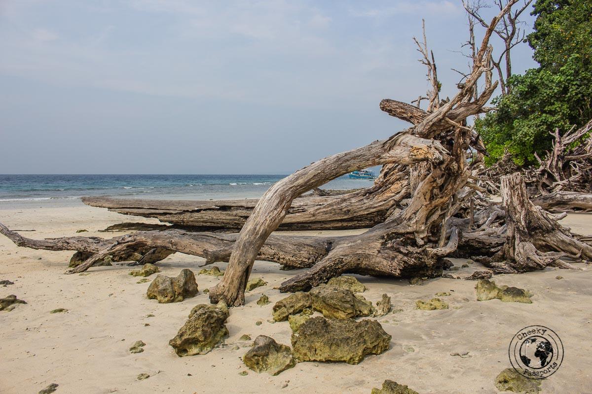 Bogwood on Elephanta beach in Neil island
