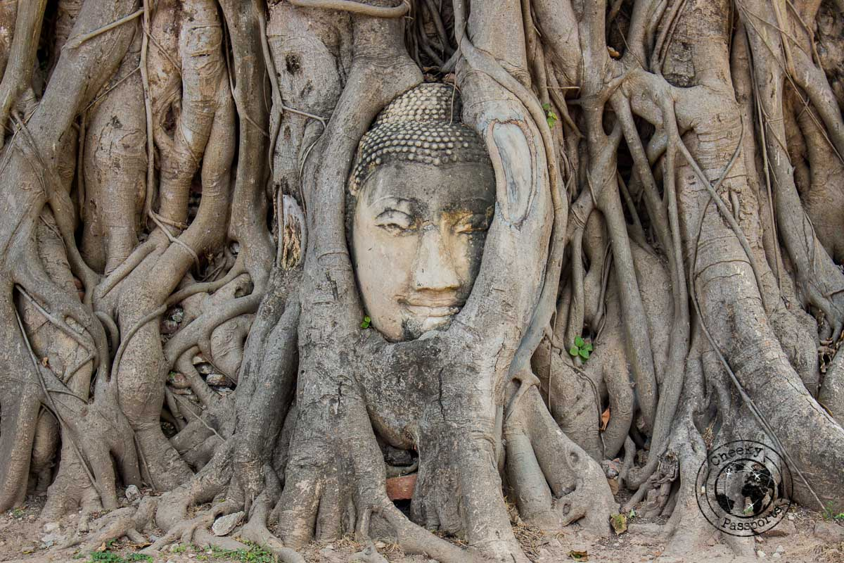 Buddha head in a tree at the Wat Mahathat is one of the most recognisable symbols of Ayutthaya, on your Bangkok Itinierary