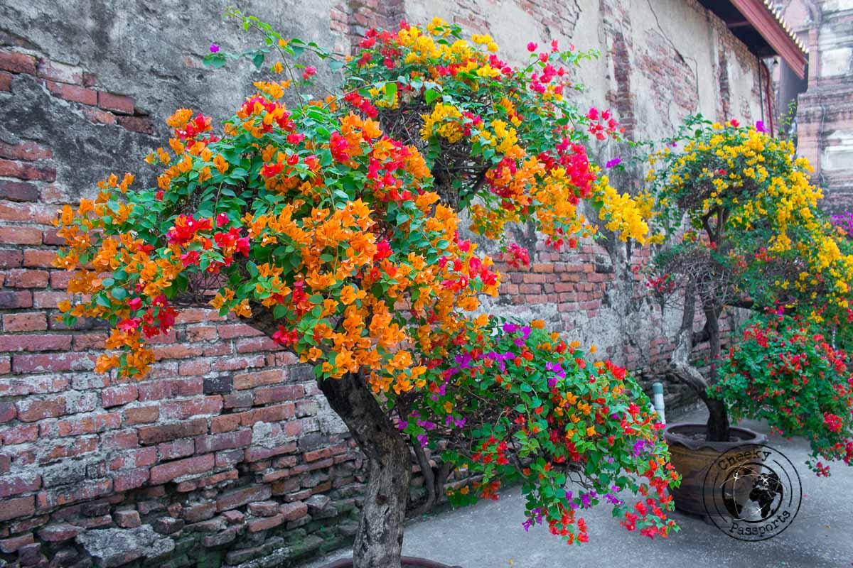 Colourful Flowers in Bangkok