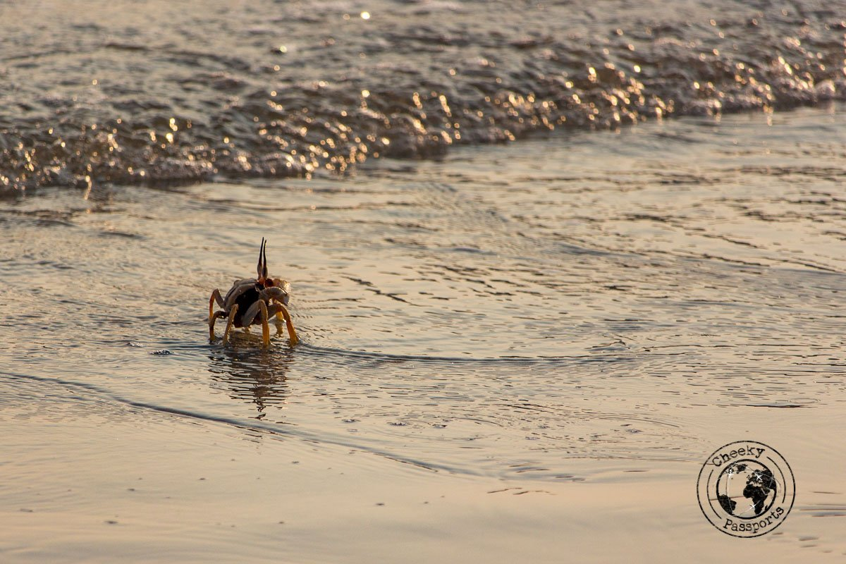 Crab sightings on the beaches