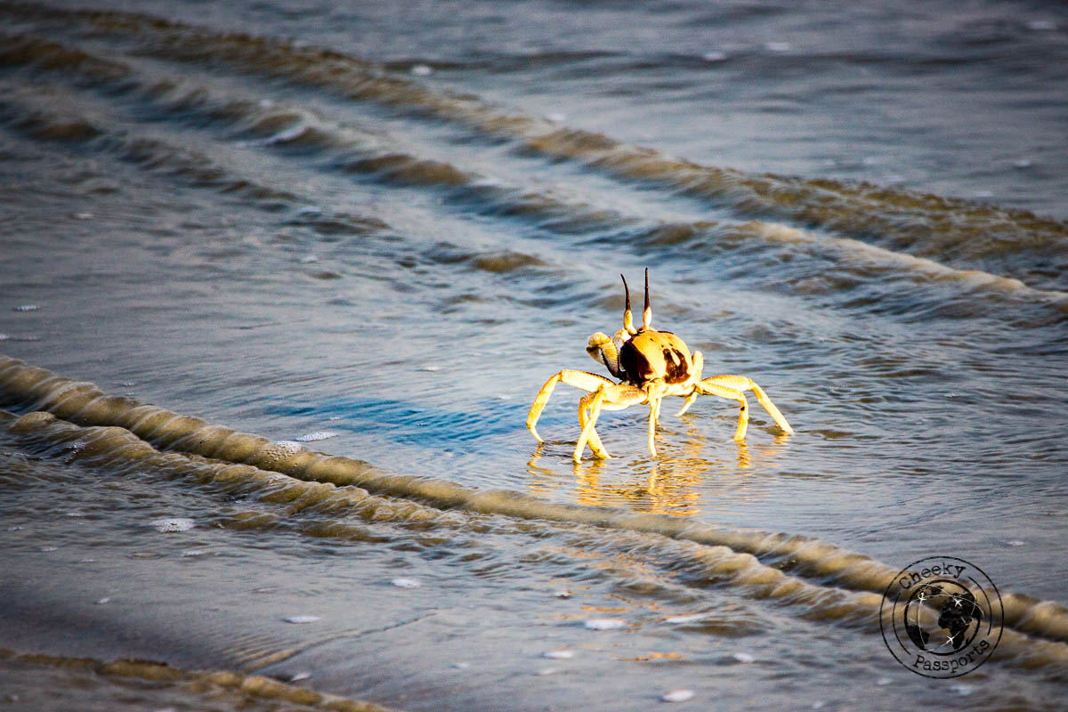 Crab spotting at the grandfather beach in Dawei