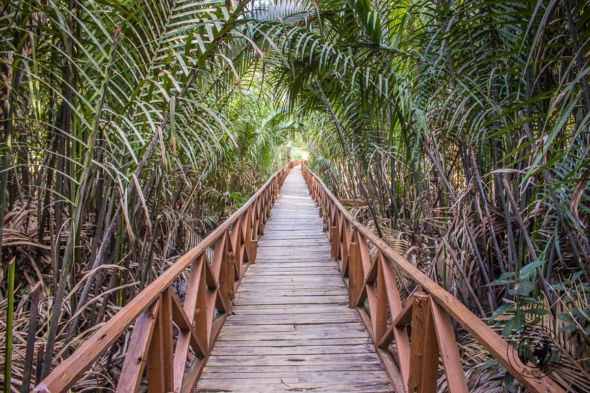 Dhani Nallah Mangrove Walkway is one of the top places to visit in Andaman
