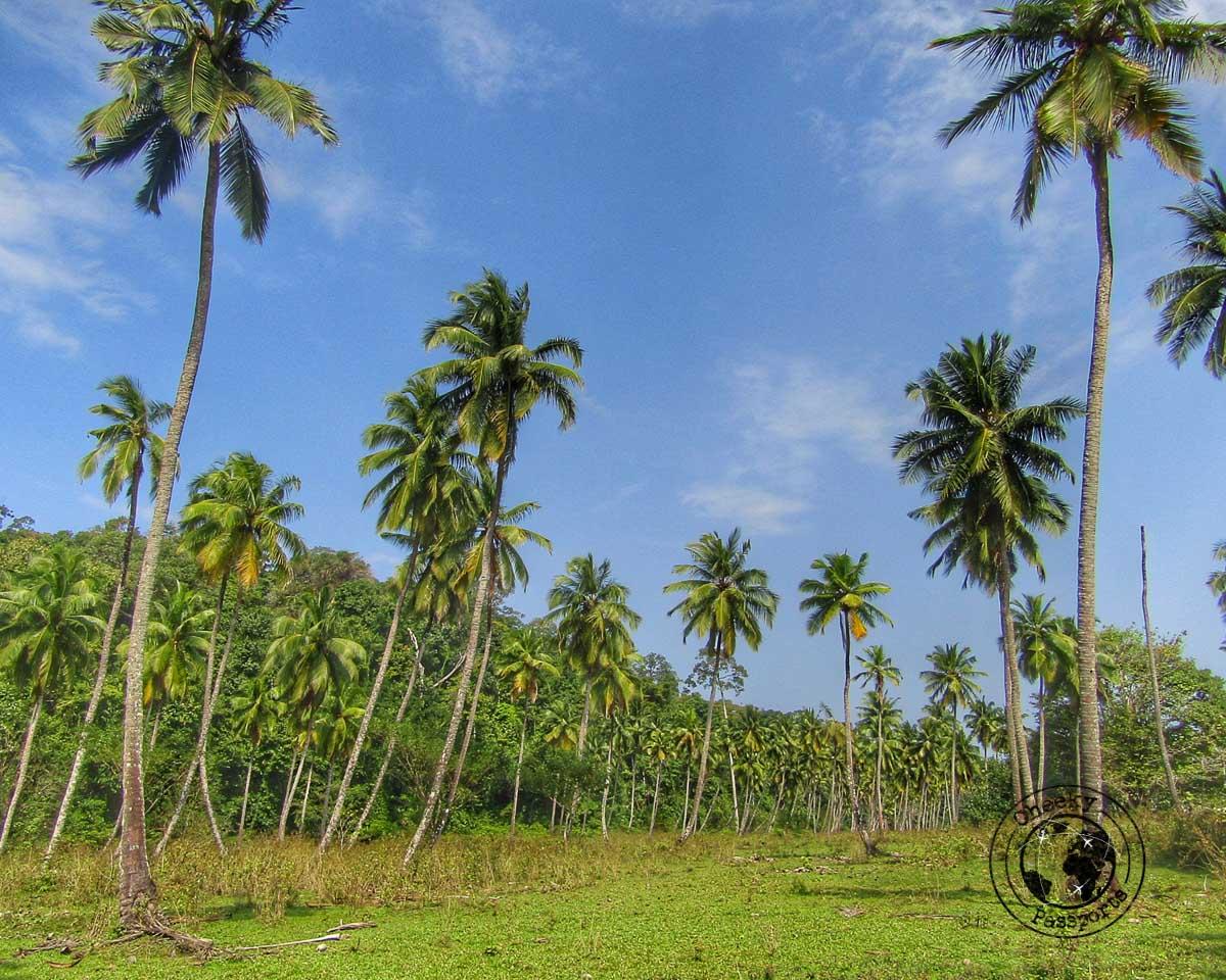 Exploring Long Island in Andaman