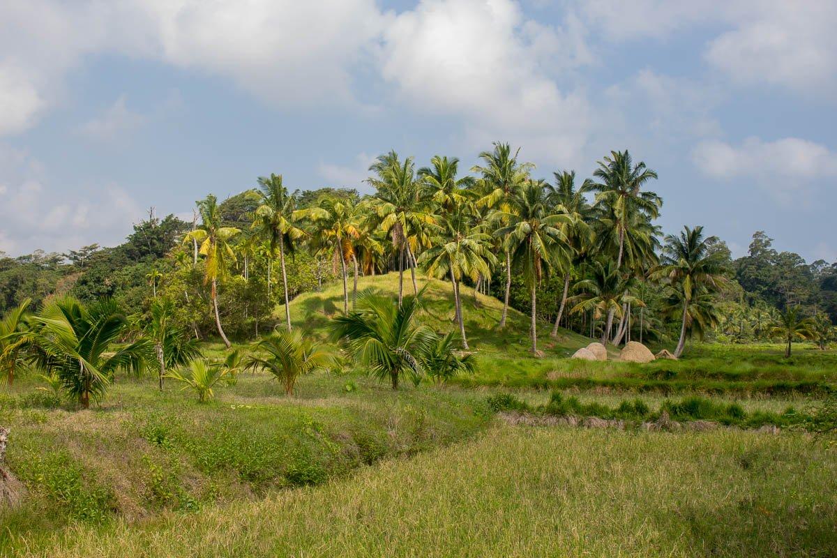 Off the beaten Neil island vegetation in Andaman