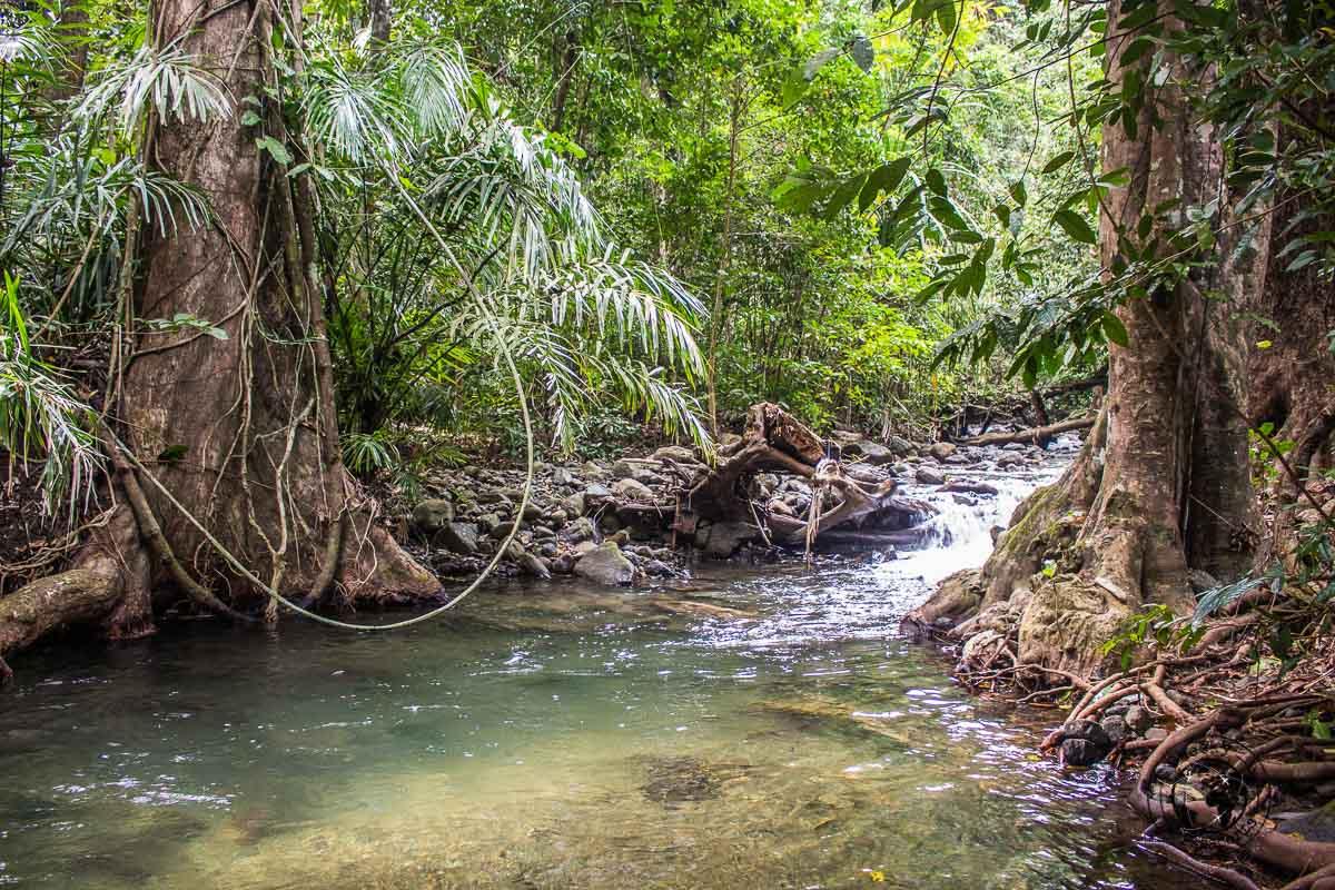 The jungle trek towards saddle peak on our andaman itinerary