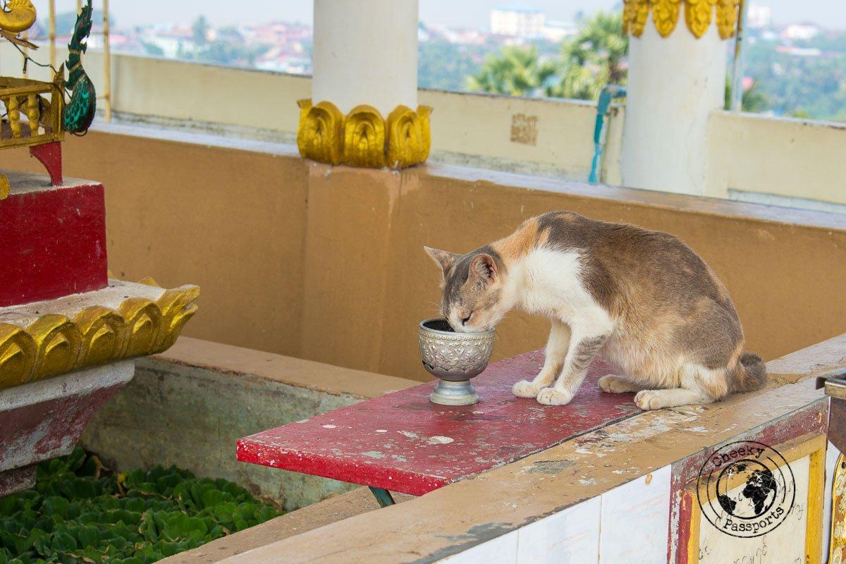 Cats enjoying myanmar's heritage