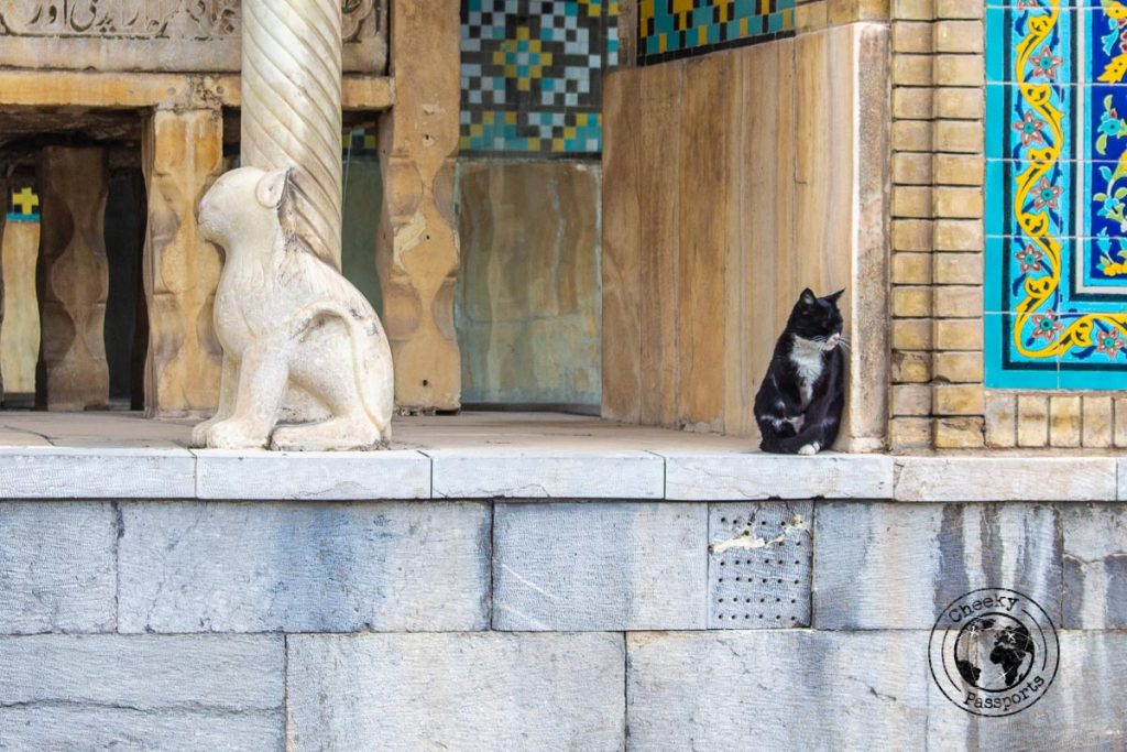 a picture of two cats, one live black cat and a marble white cat