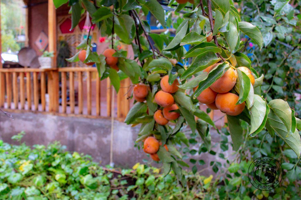 Alamut Hostel garden - things to do in Qazvin, Iran
