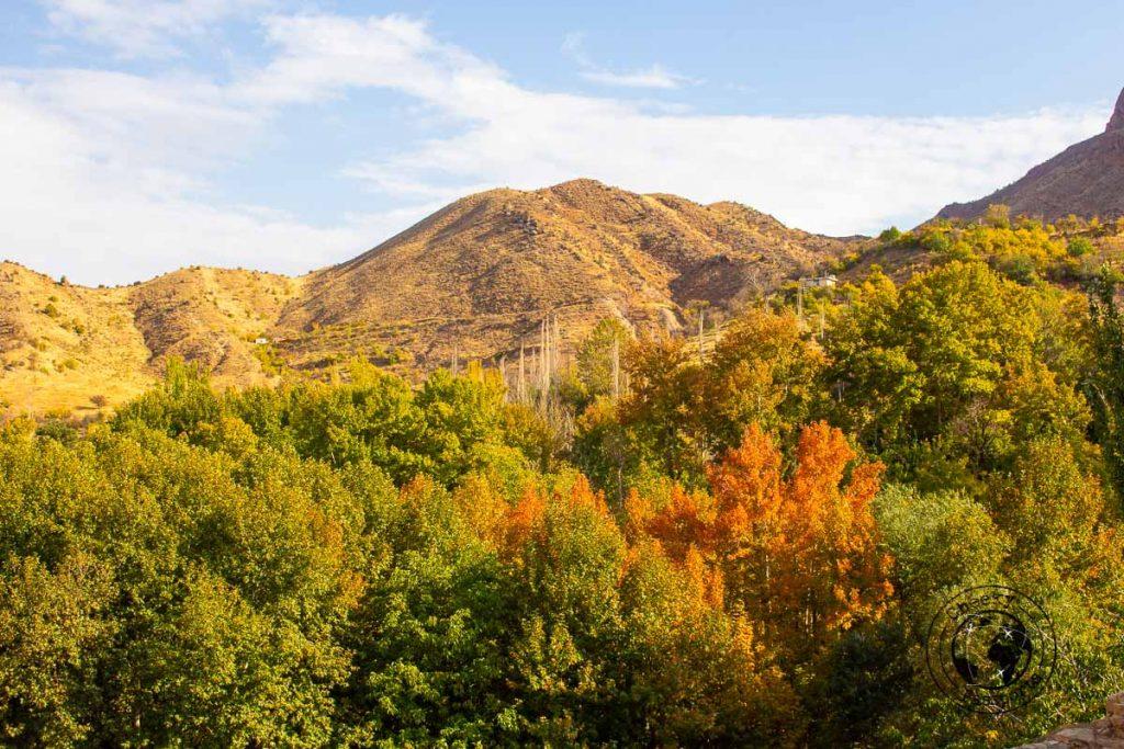 Vegetation in Ghalat